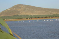 Lago La Ratosa Alameda