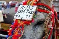 Mijas Donkey Taxis